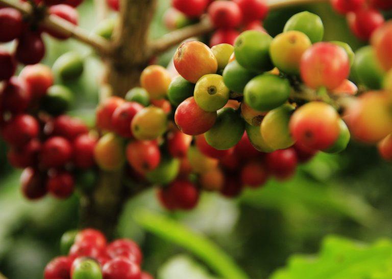 SeedSprint member, ClearLeaf, advances sustainable crop protection